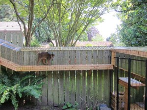 Deluxe Cat Enclosure