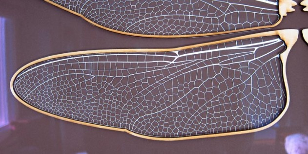 paper mache Dragonfly- wing close up